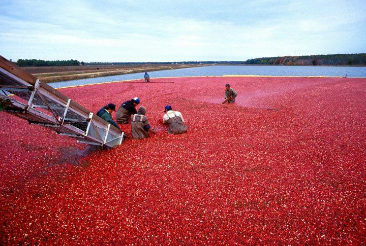 Faut-il renforcer les contrôles de l'agroalimentaire ?